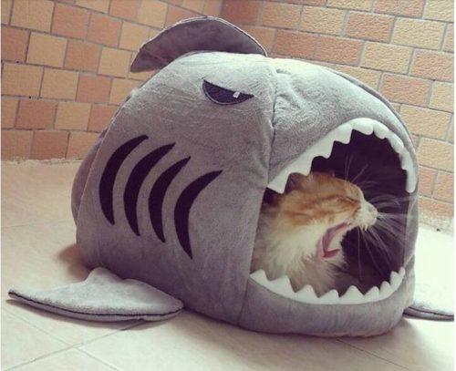 Домик Акула для животных