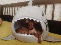 Домик Акула для кошек и собачек
