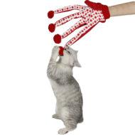 Перчатка для игры с кошкой